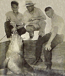 Antique photo of three guys next to a fish.